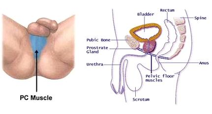 Male loss of libido after orgasm