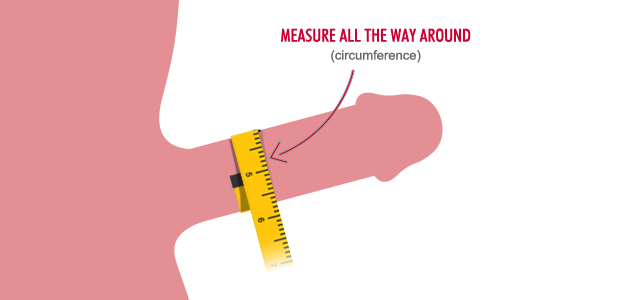 Apologise, but, Measurements of penis