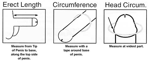 Girl measure size of penis
